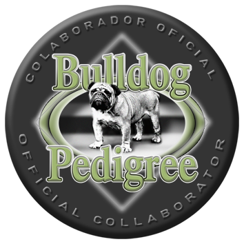 Bulldog pedigree